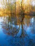 2008-01-29 Tree reflection