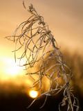 2008-02-10 Straw in sunset