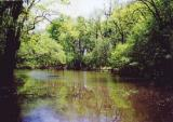 Montgomery Lake (Color)