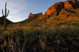 Wildflower Sunrise (PIchacho Peak)