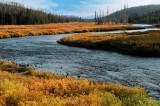Yellowstone river in fall