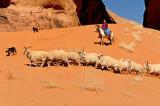 Sheep Drive with Suzie Yazzie