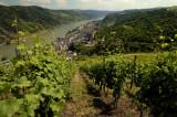 Vineyards over Ober Wessel