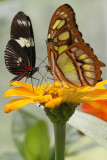 June 2010 - Butterflies, Flowers and Lighthouse Preservation