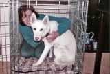 RIP Allison - age 9 1/2