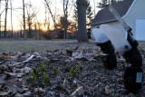 Setup shot for Hyacinth at Sunset
