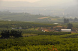 Smokey haze of the vineyards and orchards of Oliver, BC