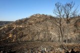 Carmel wildfire - the day after