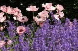 Scampston Gardens009.JPG