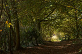 Little Wold Plantation near Brantingham IMG_2400.jpg
