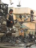 pigeon man Victoria Square.jpg