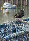 Bridlington harbour 3