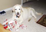 Buddy - Christmas 2007