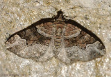 Toothed Brown Carpet
