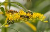 Sweat Bees & Pennsylvania Leatherwing