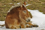 A Mule's Day Off