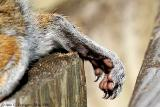 Napping Squirrel's Foot