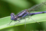 Variable Dancer - Male
