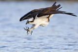 Quiz No 3 - Osprey