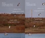Osprey dives - estimated average speed