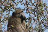 Kruger Park 2007