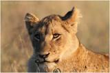 Kruger National Park  2010