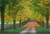 Beech tree avenue 1 of 3