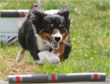 Chiltern Fair - Flyball Association racing