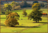 Autumn, Thames Valley, Stud Farm