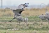 Unusual Cranes