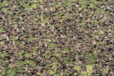 European Starlings DPP_10042155 copy.jpg