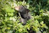 Cub hunts acorn 3/4 AEZ27541 copy.jpg
