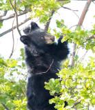 Climbing Cub 3/5  AEZ28055 copy.jpg