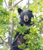 Climbing Cub 4/5  AEZ28075 copy.jpg