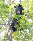 Climbing Cub 5/5  AEZ28080 copy.jpg