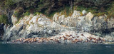 Alaskan seals