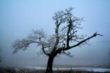 On White Top Mountain VA. 1/2/09