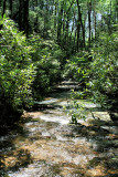 Wading Down the Creek to get thought the Thickets