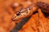 reptils__amphibians