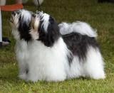 2009 Valley Kennel Club Dog Show