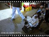 Puppy cart