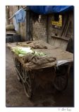 Zucchini cart