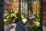 Wald (84312)