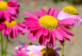 Blumen (96042)