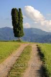 Weg und Baum (96423)