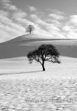 Baeume im Schnee (0389)