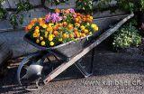 Schubkarre mit Blumen (7221)
