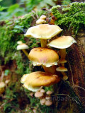 Pilze (09131)