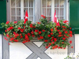 Fenster mit Blumen (09783)
