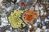 Stein mit Flechten (5104)